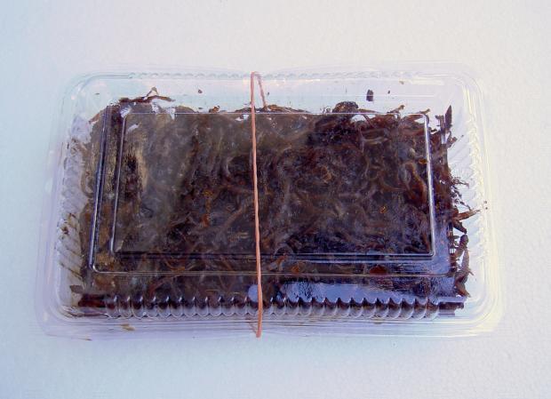 頂き物の「イカナゴの釘煮」