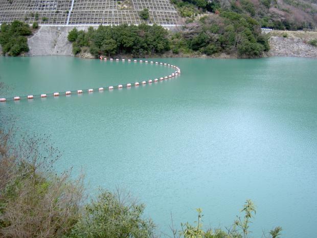 ダム池が最近は妙に青っぽい感じ