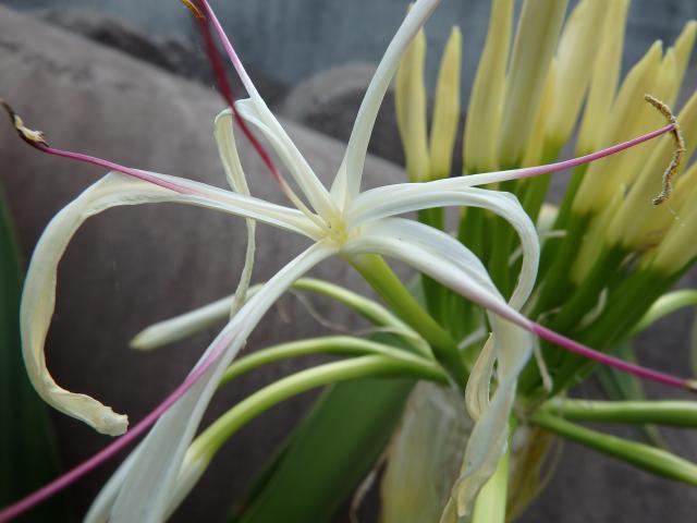 個花を拡大観察