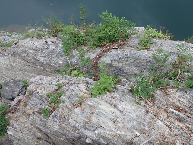 このあたりは三波川変成帯