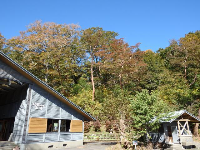 店の背後の森にはヒメシャラの大木