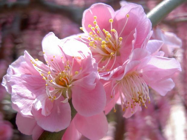 個花のアップ 濃色で美しい