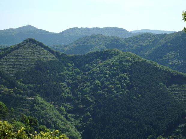 シャクナゲ自生地から眺める山々