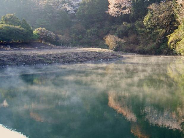 池面の幻想的な光景
