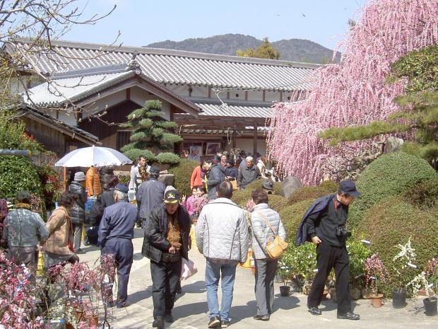 花見客で賑わい、苗木やミカンを売る出店もある