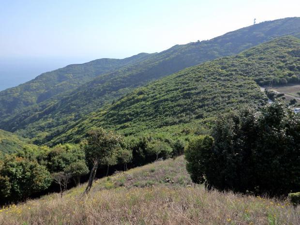 諭鶴羽山の南斜面