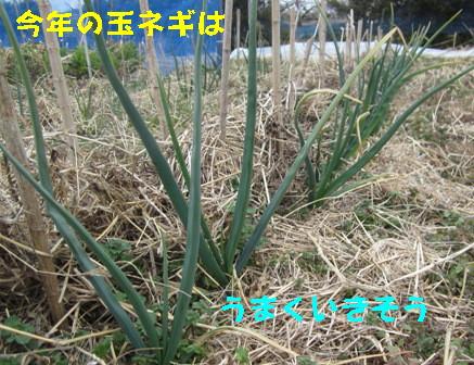 春近づく? (6)