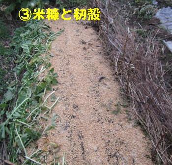 間作小松菜 (4)