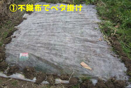 間作小松菜 (3)