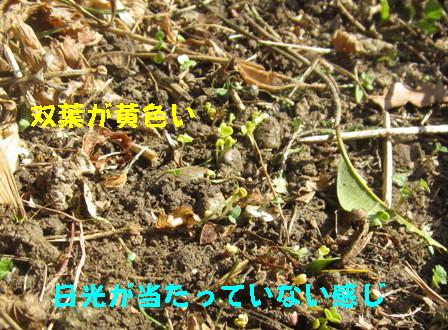枯れ草のみ