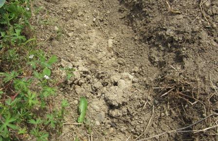 畝作り (3)