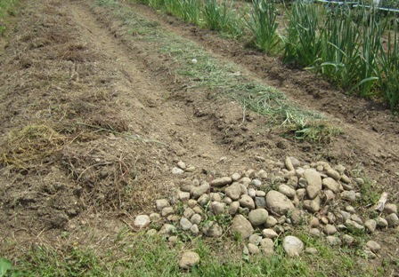 畝作り (2)
