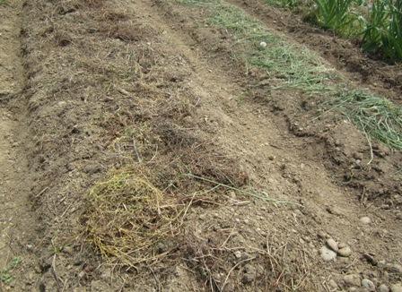 畝作り (1)