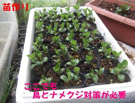 枝豆再 (2)