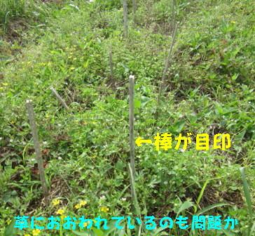 枝豆 (1)