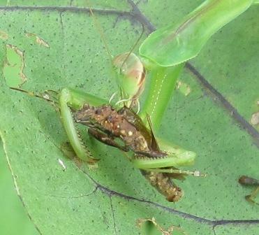 益虫 (2)