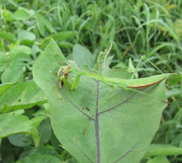 益虫 (1)