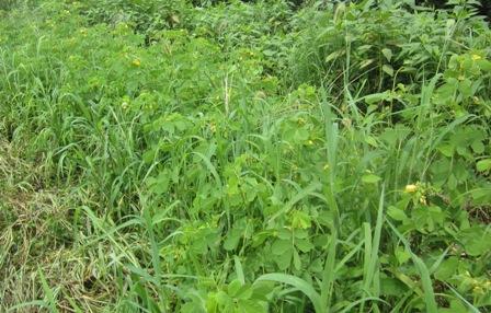 種蒔きエビス (1)