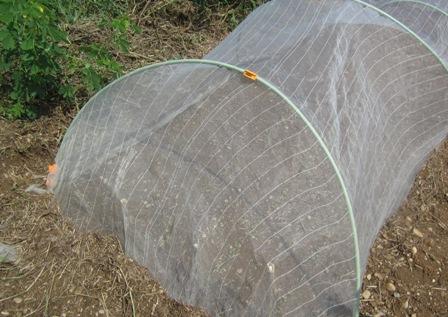 秋冬作種蒔き (2)