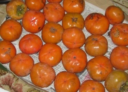 柿酢造り (1)