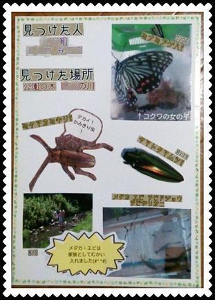 昆虫レポート2