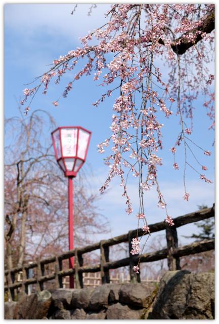 青森県 弘前市 ひろさき ヒロサキ 桜 まつり 祭り 弘前城 弘前公園 観光 弘前さくらまつり