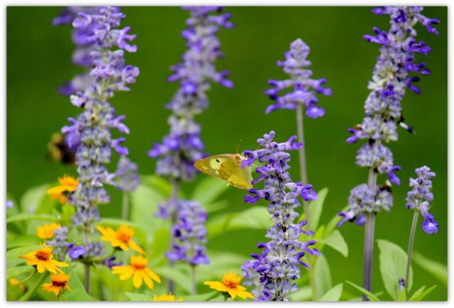 蝶々 昆虫 写真 弘前公園