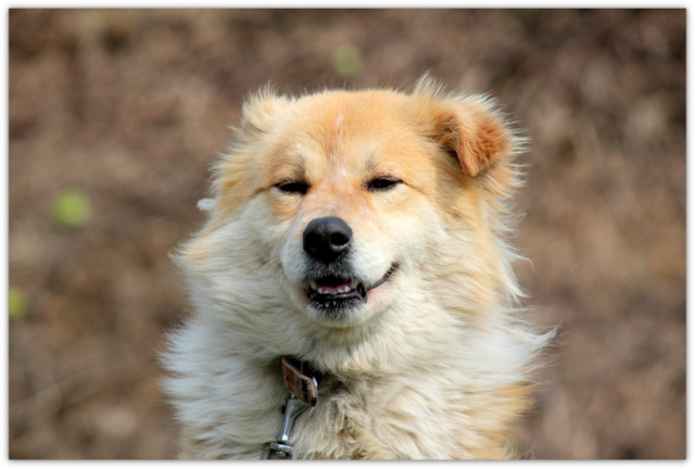 犬 いぬ イヌ 写真