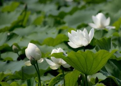 I白い花MGP5252web