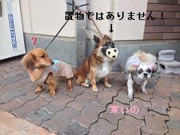 IMG_0975.jpg