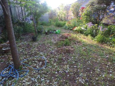 5・2朝の庭1