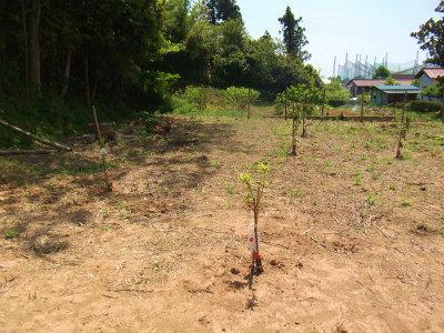 空き地には果樹が