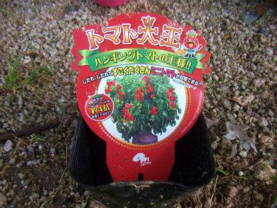トマト大王1