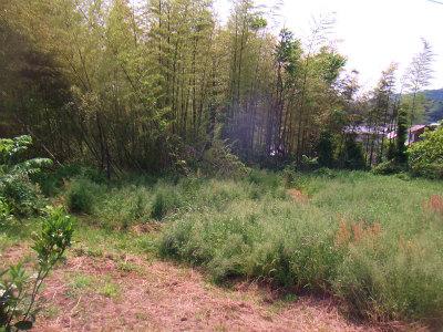 荒地に竹が侵入