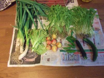 6.23収穫