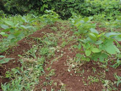 7.6枝豆