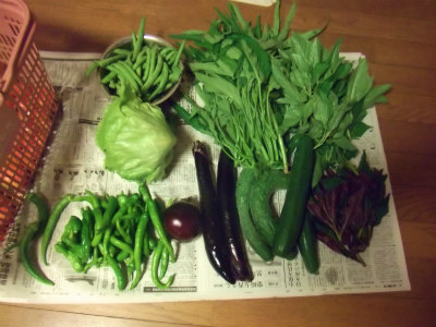 7.19収穫1