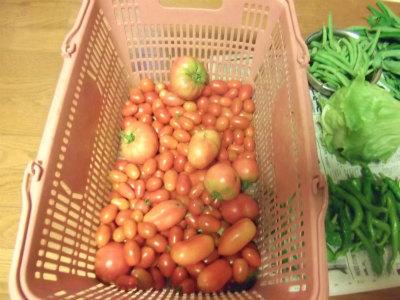 7.19収穫2