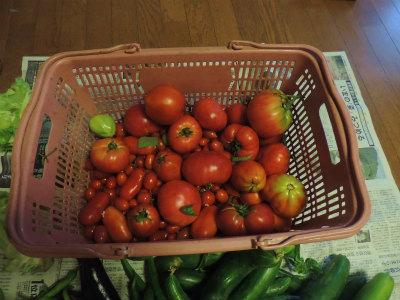 7.26収穫