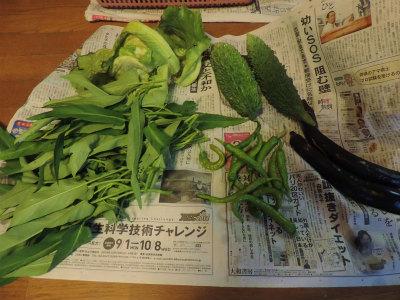 7.30収穫