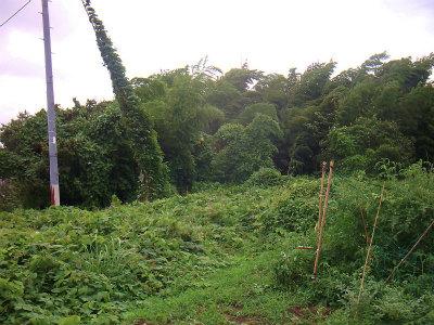 8.9風に揺れる竹