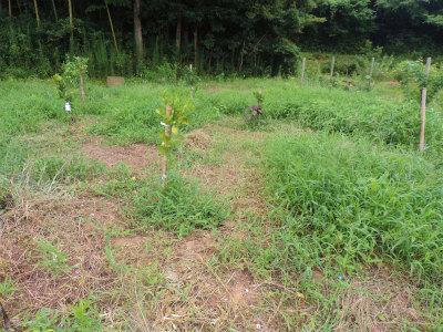 8.13空地の果樹