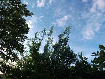 8.19久し振りの青空