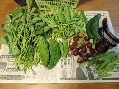 9.27収穫