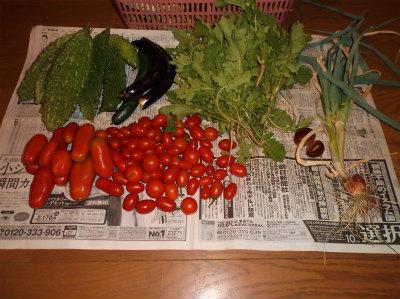 10.4収穫