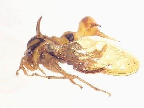 insectarium140828_5.jpg