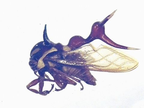 insectarium140828_6.jpg