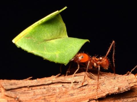 insectarium140828_a.jpg