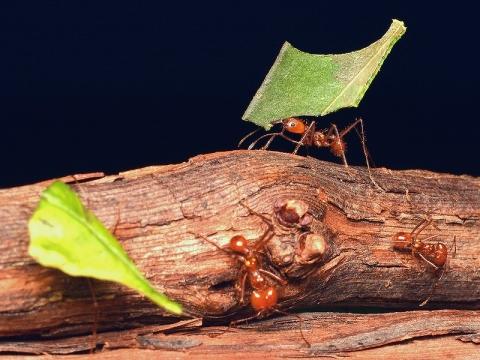 insectarium140828_b.jpg