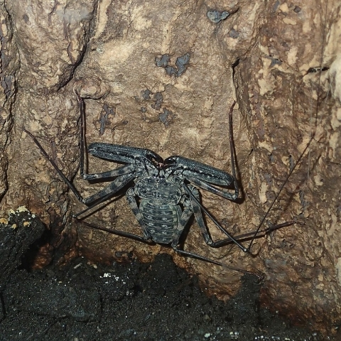 insectarium140828_c.jpg